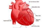 Kalp Hızı Ve Kalp Ritmi Bozuklukları