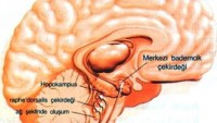 Beyin İltihabı – Ensefalit