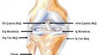 Ortopedi Doktoru Ümraniye