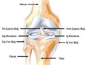 ortopedi2