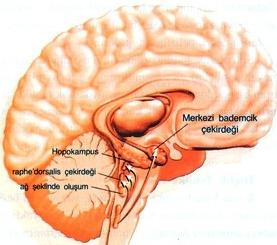 Ensefalit için önerilen modern tıp tedavileri