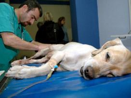 veteriner kadıköy