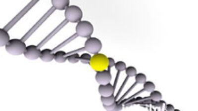 Genetik Şifre